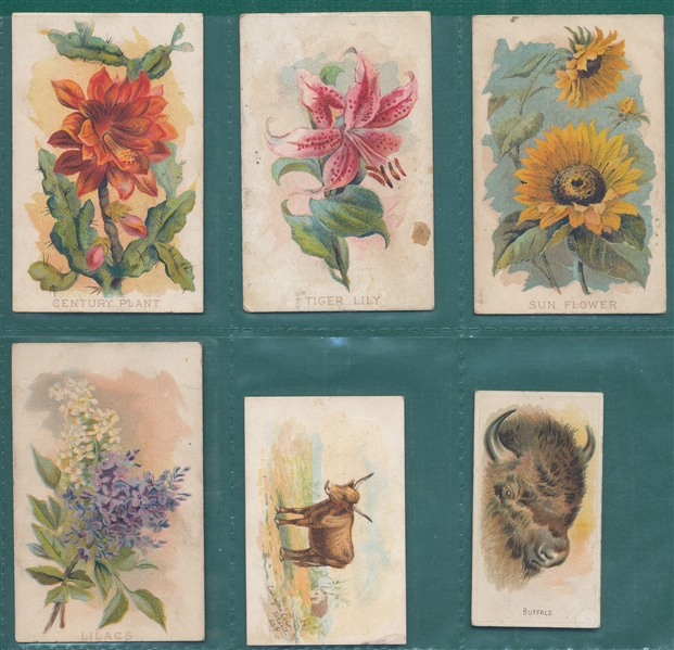 1880s-1920s Lot of (22) Animals & Flowers W/ E. T. Pilkinton-Co.